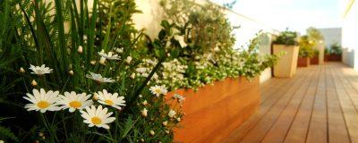 מידע וטיפים על גידול גינות ירק בגינות גג