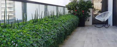 שילוב כדי צמחים במרפסת