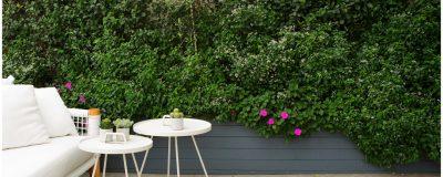 קיר עם צמחייה מטפסת בצמוד לפינת התרעננות