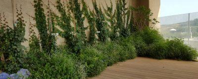 גינת גג עם צמחיה מטפסת על הקיר