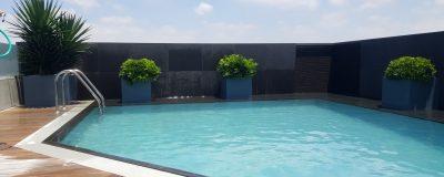 שילוב צמחיה בבריכה שעל הגג