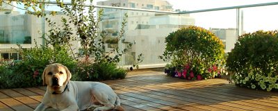 שתילות צמחיה בגינת הגג ללא שימוש באדניות
