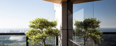 עצים חיים בגינת גג