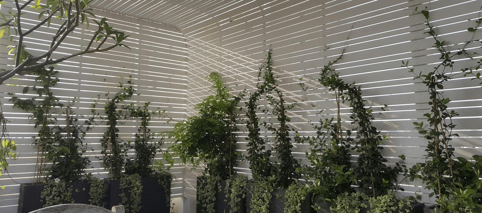 שילוב צמחים מטפסים בגינה