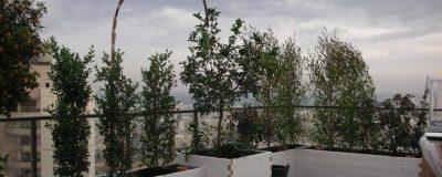 שלבי עבודה על גינה ירוקה במרפסת