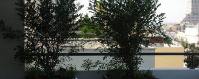שתילת עצים בגינת מרפסת
