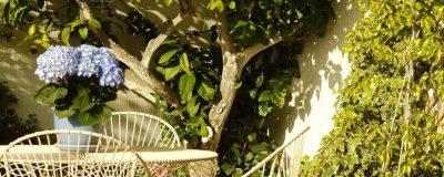 פינת ישיבה מתחת לעץ בגינה