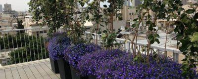 פרחים סגולים להכנסת צבע לגינת הגג המפוארת