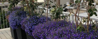 הקמת גג בדופלקס – תל אביב