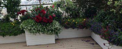 פרחים בשלל צבעים בגינת מרפסת