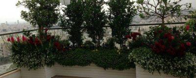 פינה מרהיבה של צמחים ועצים בגינת מרפסת