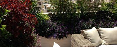 שיחים עם פרחים סגולים וורודים בגינת הגג