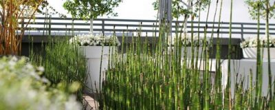 צמחייה וכדים בגינת גג