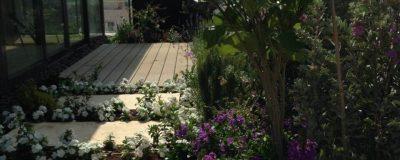גינה מרהיבה עם פרחים סגולים