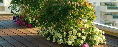 דרכי התגוננות מפני מזיקים לגינה