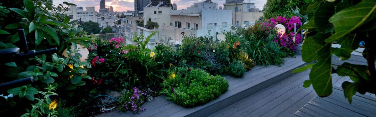 גינת פרחים מרהיבה במרפסת