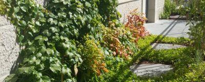 צמחיה מטפסת במרפסת שמש