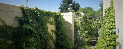 מרפסת עם גינה ירוקה