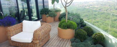 עיצוב ייחודי לצמחים בגינת הגג