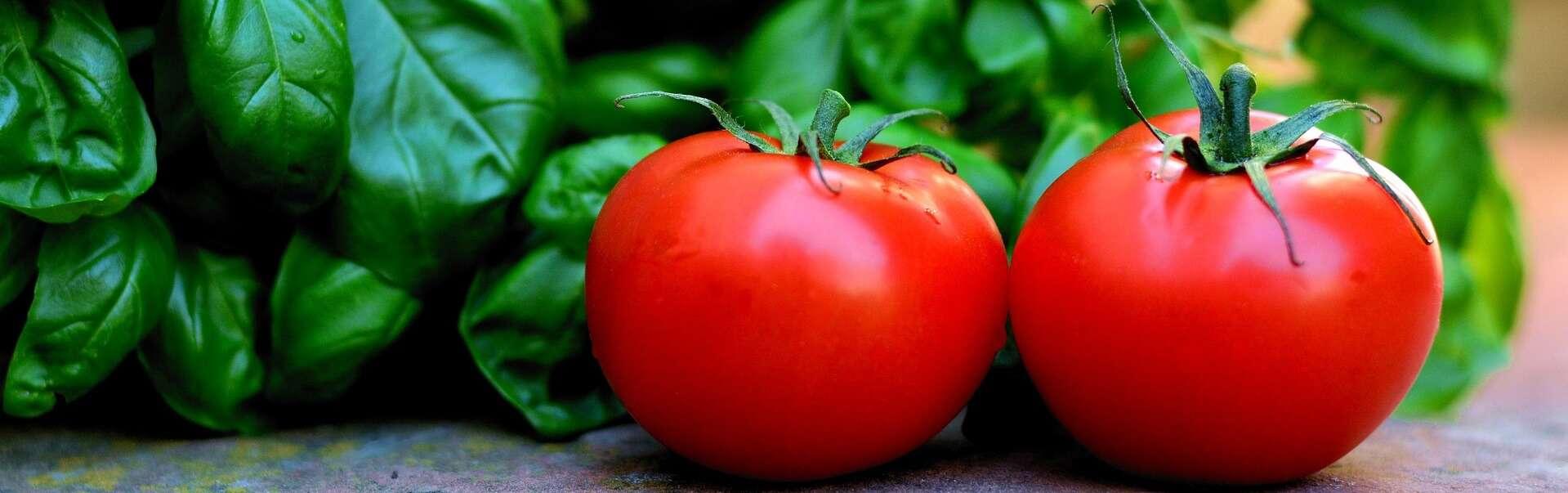 עגבניות ובזיליקום בגינת ירק בגינת המרפסת