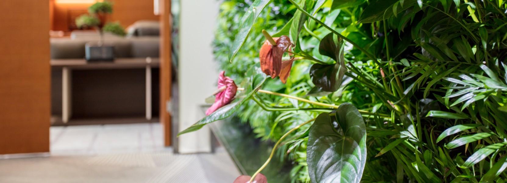 צמחיה להצמחת ערך הדירה